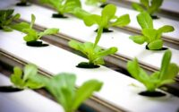 Hydroponic farm set up can be order from Amazon online
