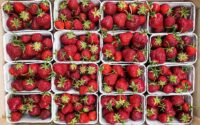 Strawberry is packaged using MAP for safety